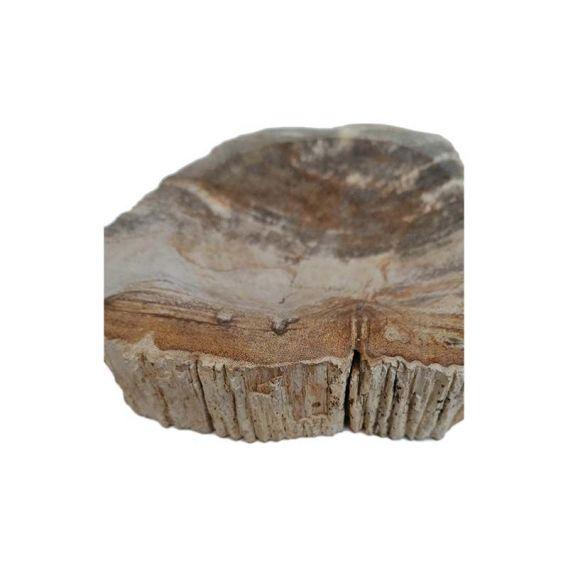 Porte-savon en bois fossilisé